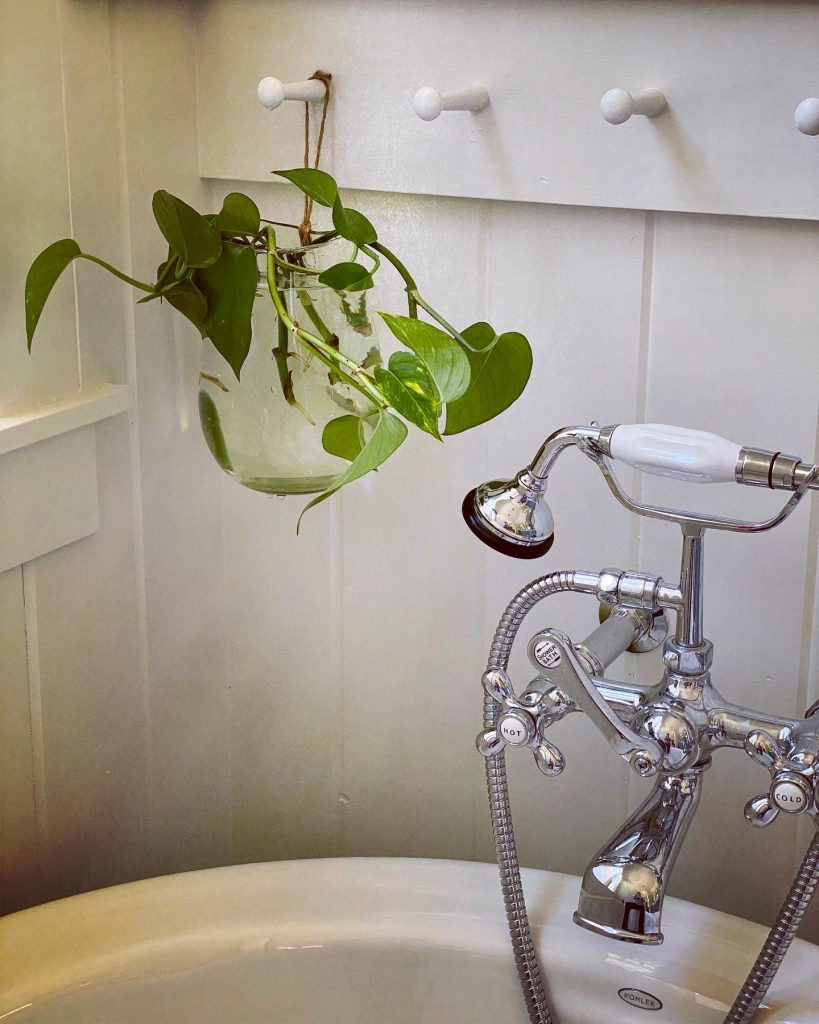 propagating pothos plant hanging in clear glass vase in master bathroom
