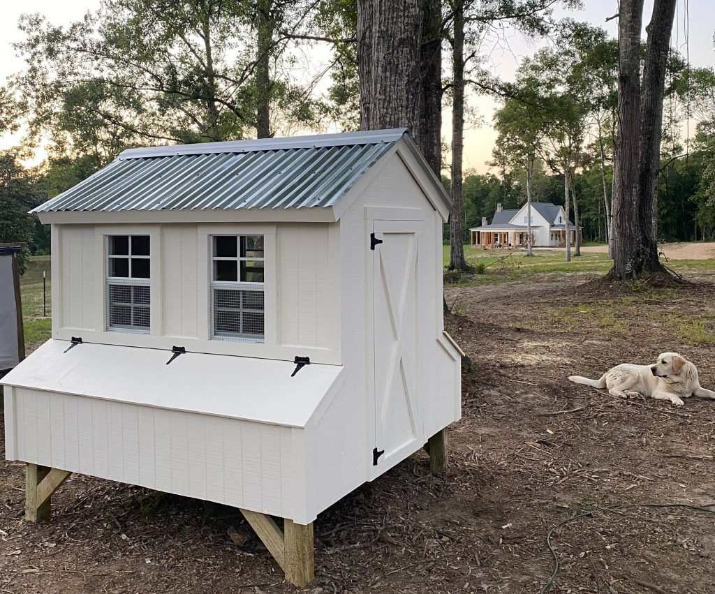 DIY Farmhouse chicken coop with labrador retriever