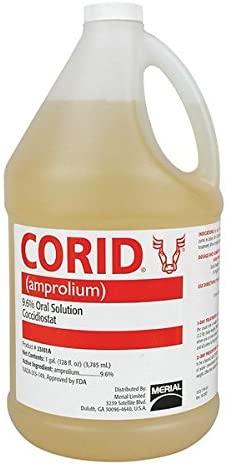 nigerian dwarf goat, dairy goat, homestead, farmstead, baby goat care, coccidiosis treatment