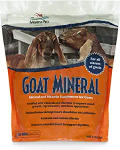 nigerian dwarf goat care, dairy goat, homestead, farmstead, baby goat care, goat minerals