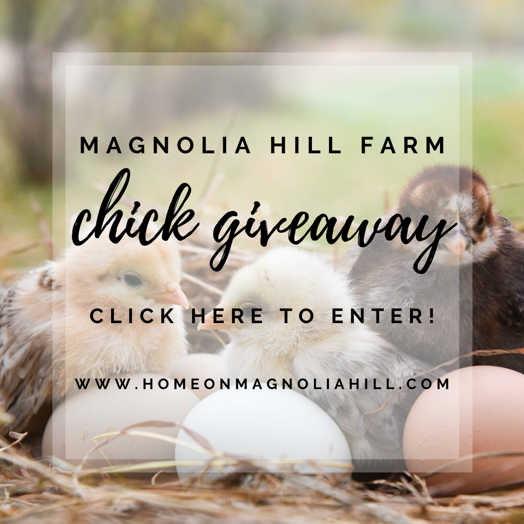 Home on Magnolia Hill Chick Giveaway